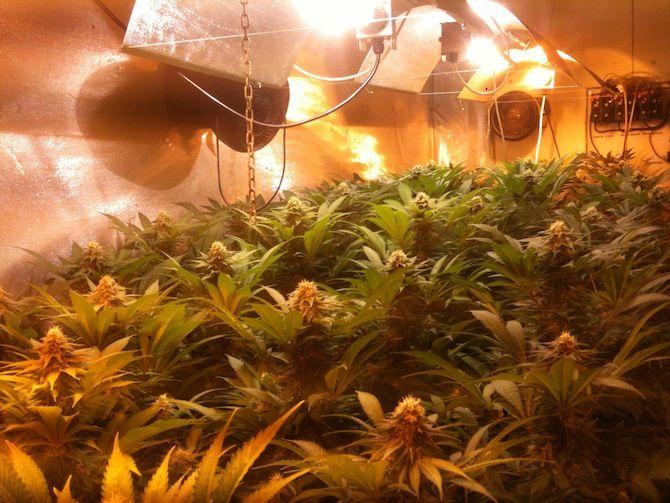 Consejos Para Plantar Marihuana De Interior Guía De