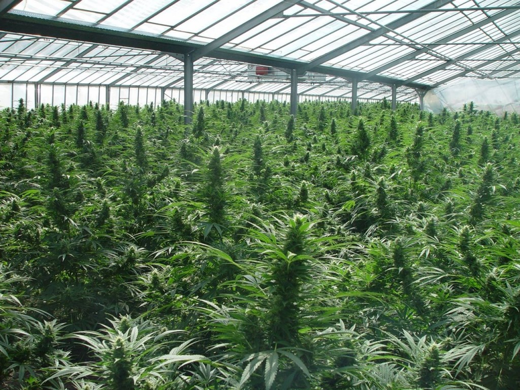 25 consejos imprescindibles para cultivar marihuana en for Cultivo interior marihuana