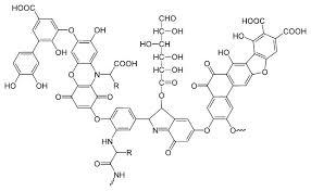 estructura_acido humico