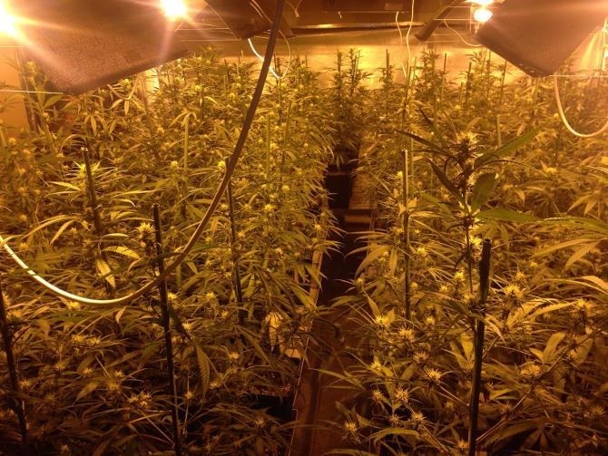 como conservar la marihuana