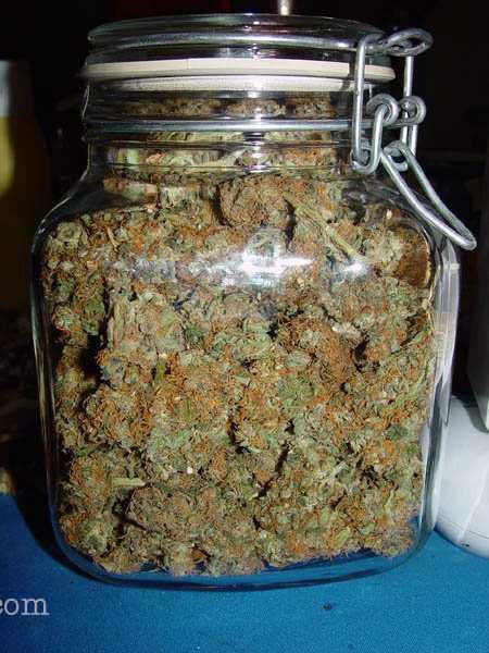 como guardar la marihuana