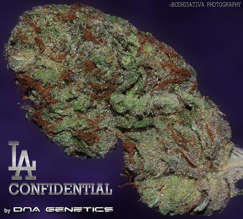 planta de marihuana indica
