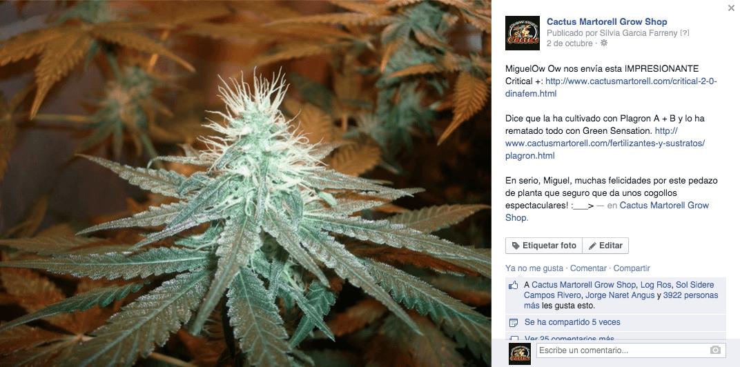Ganador reto 6000 cactusitos