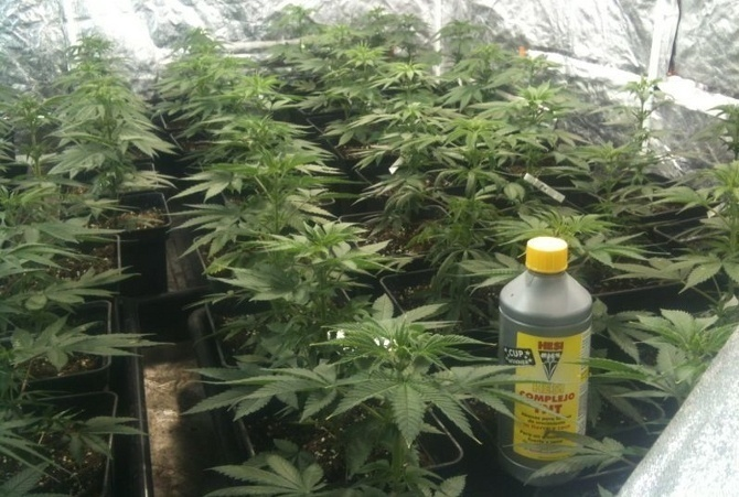 abonos para marihuana