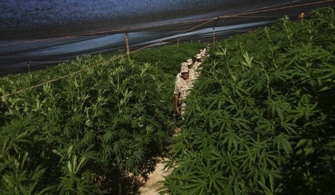 Legalizar marihuana Mexico