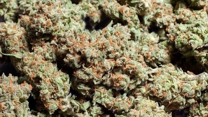 Marihuana floración rápida