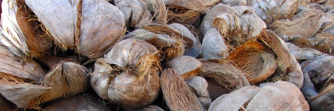 sustrato de coco
