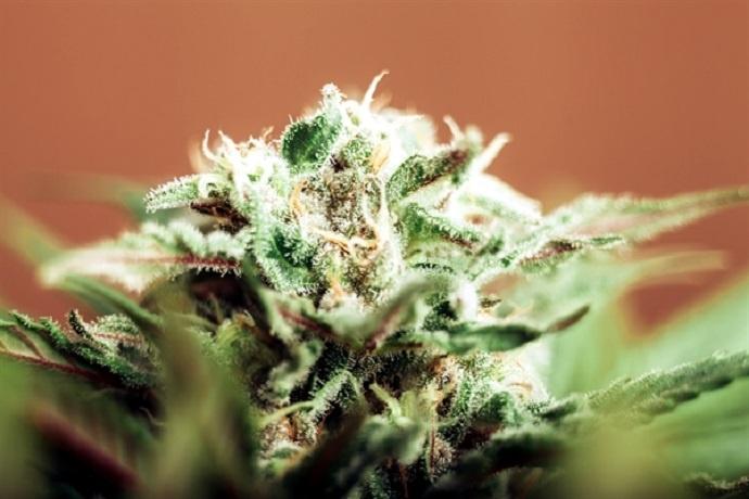 tratamiento_cannabis