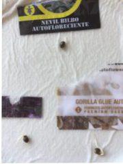Semillas auto germinadas