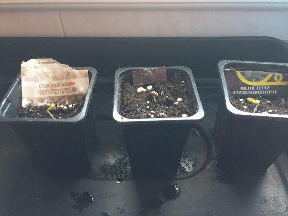 Semillas sembradas