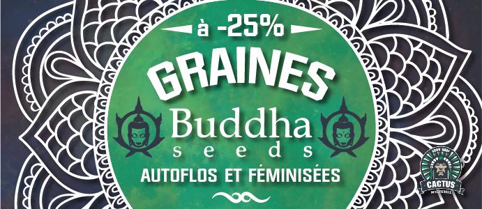 Graines Buddha Seeds à - 25 % de résuction