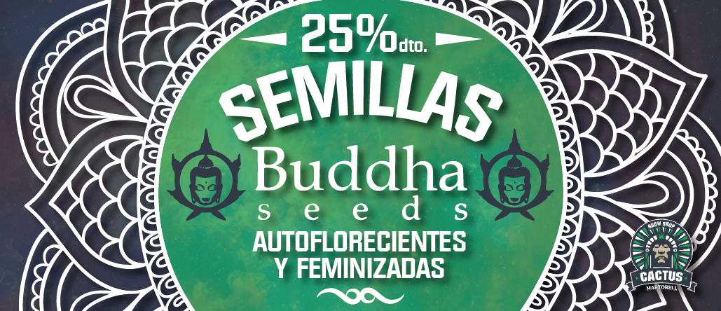 Semillas Buddha 25% de descuento