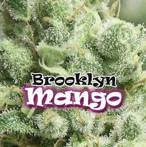 Brooklyn Mango Feminizadas