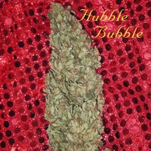 Hubble Bubble Feminizadas