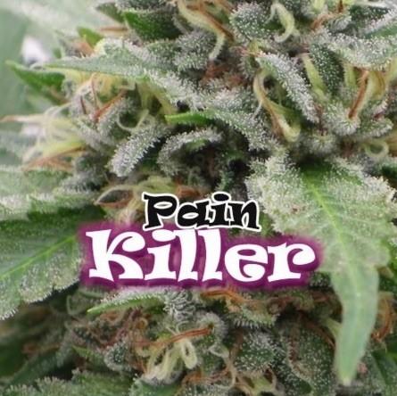 Painkiller Feminizadas