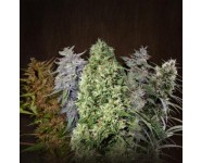Mix de Semillas Ace Seeds