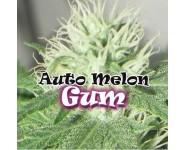 Melon Gum Autoflorecientes