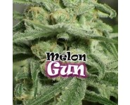 Melon Gum Feminizadas