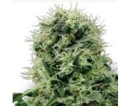 PURE POWER PLANT White Label