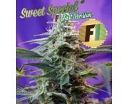 Sweet Special destaca por su rápida floración