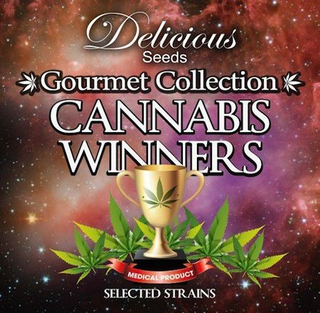 Graines Cannabis Winners#1