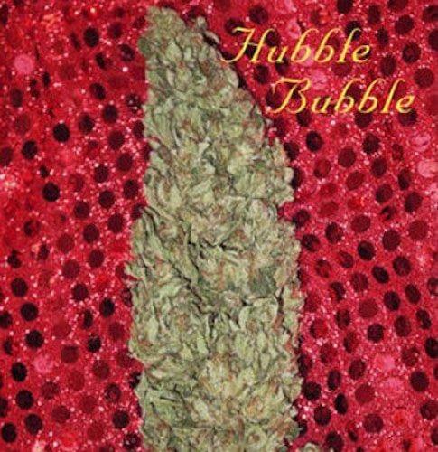 Graines feminisées Hubble Bubble
