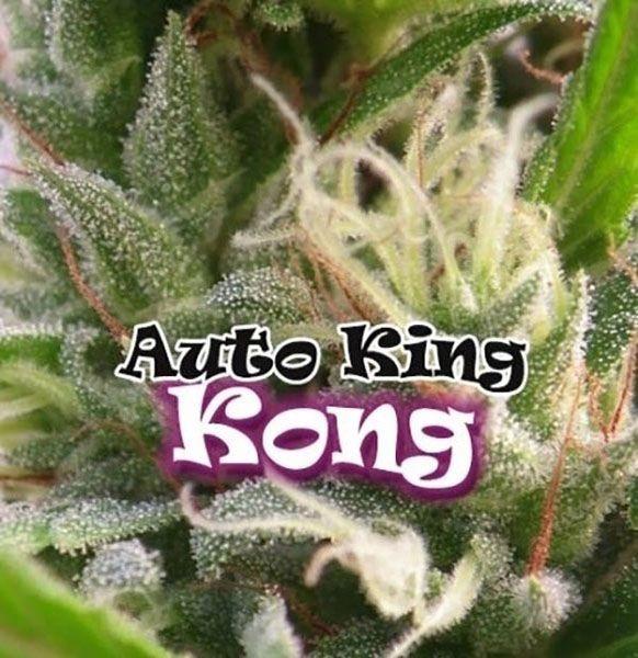 Graines feminisées Auto King Kong