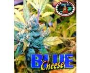 Graines feminisées Blue Cheese