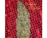 HUBBLE BUBBLE Mandala Seeds