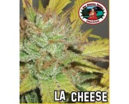 Graines feminisées LA Cheese