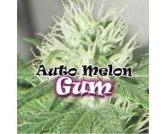 Graines feminisées Auto Melon Gum