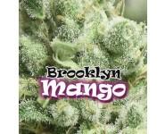 Graines feminisées Brooklyn Mango
