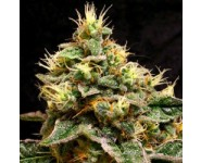 Graines Confidential Cheese
