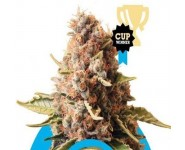 EUPHORIA Royal Queen Seeds