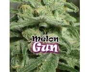 Graines feminisées Melon Gum