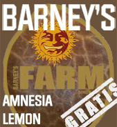 Amnesia Lemon Gratis