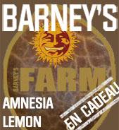 Amnesia Lemon en cadeau
