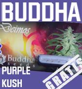 Purple Kush Gratis