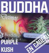 Purple Kush en cadeau