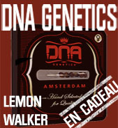 Lemon Walker en cadeau
