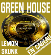 Lemon Skunk en cadeau