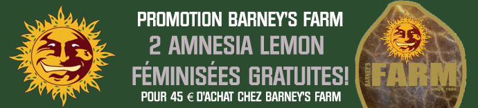 Promotion Barneys Farm