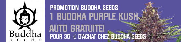 Promotion Buddha Seeds
