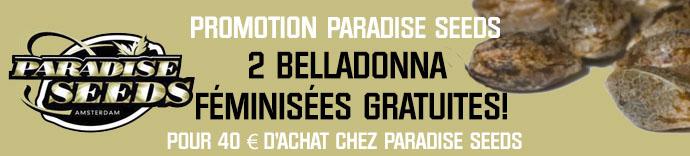 Promotion Paradise Seeds