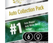 AUTO COLLECTION PACK 1 Paradise Seeds