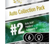 AUTO COLLECTION PACK 2 Paradise Seeds