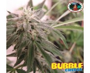BUBBLE CHEESE Big Buddha