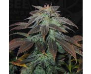 HEAVY DUTY FRUITY TH Seeds