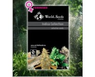 INDICA COLLECTION World Of Seeds