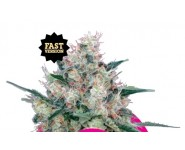 HONEY CREAM FAST VERSION Royal Queen Seeds